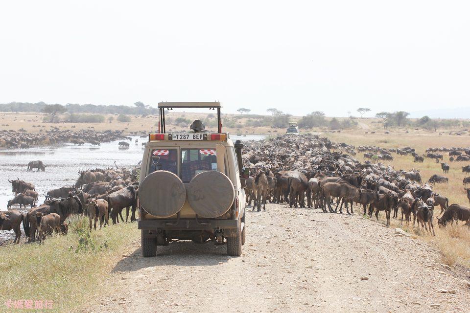 [坦尚尼亞] Tanzania Central Serengeti Grumeti River Safari – 動物大遷徙獵遊 (下)